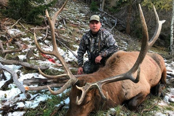 Hunting Bull Elk