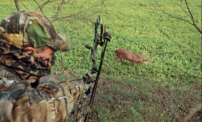 Bow Hunting For Deer