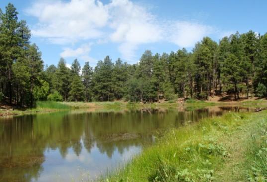 Prescott National Forest