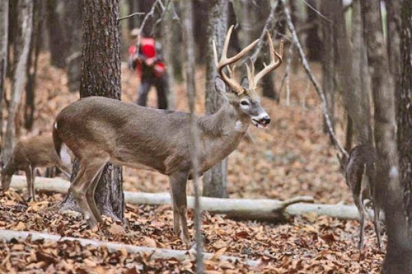 Stalk Hunt